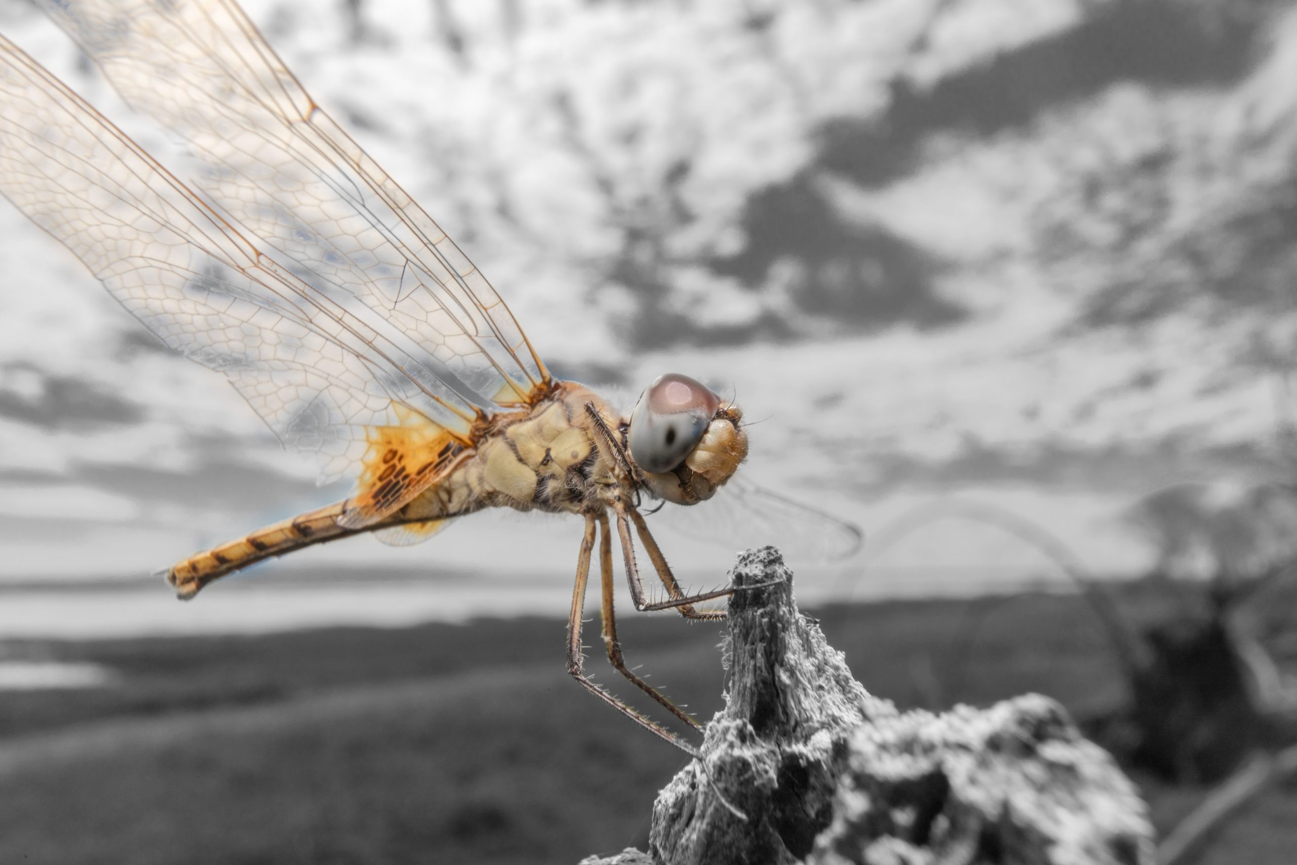 A picture of a dragonfly taken by Dr. Abbott